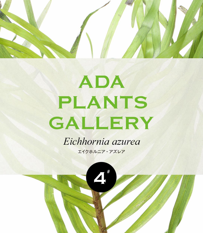 ADA PLANTS GALLERY #04 「エイクホルニア・アズレア」