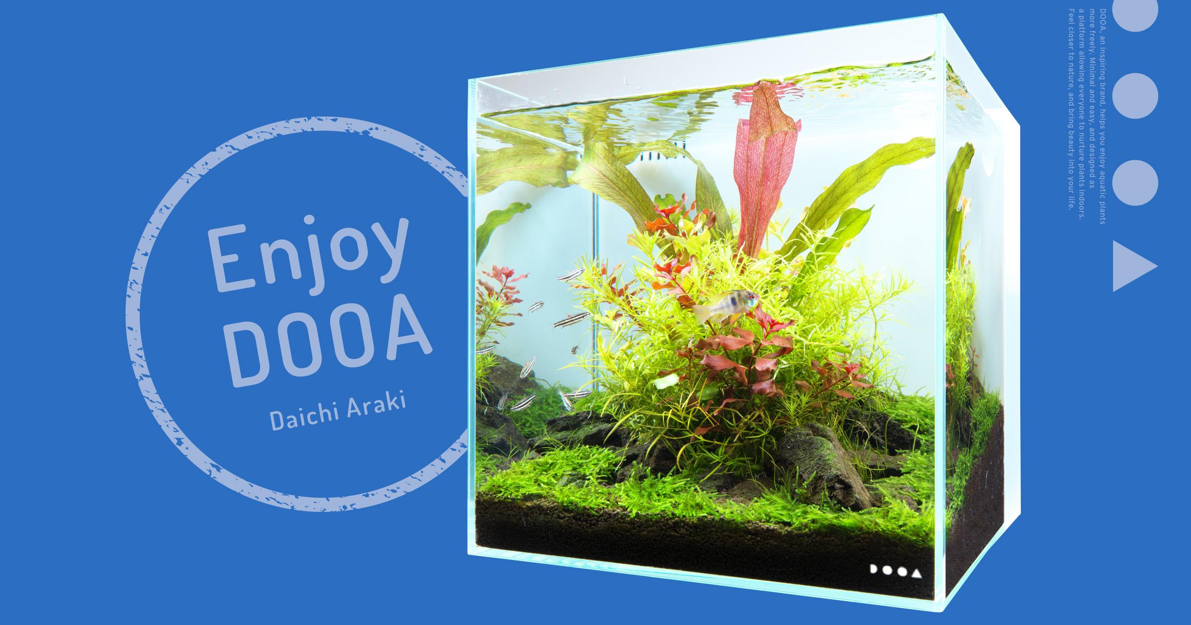 Enjoy DOOA「佗び草と小石を用いたシンプルなシステムアクア 30」