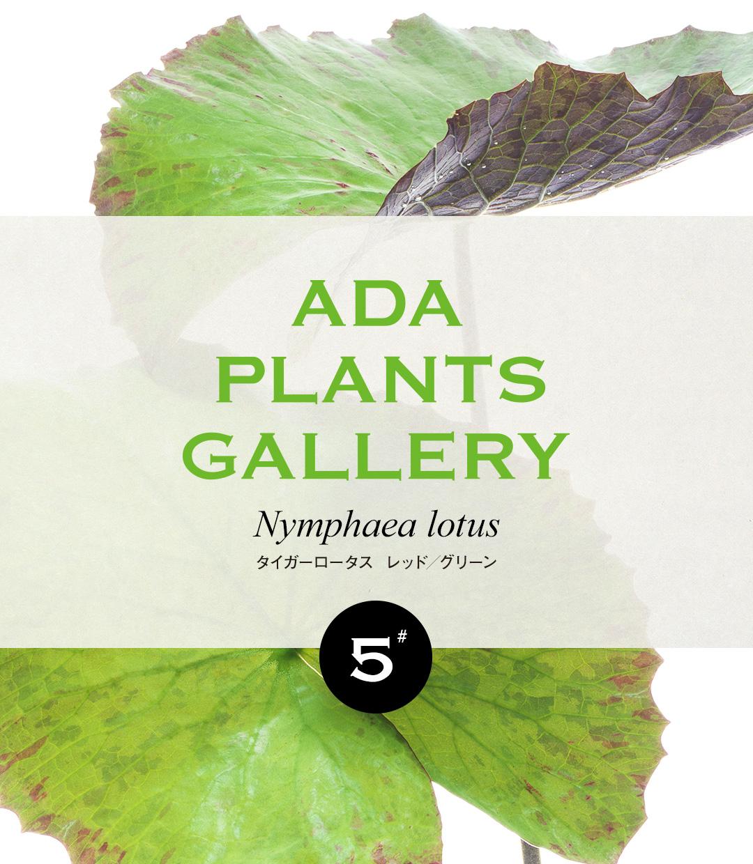 ADA PLANTS GALLERY #05 「タイガーロータス  レッド/グリーン」