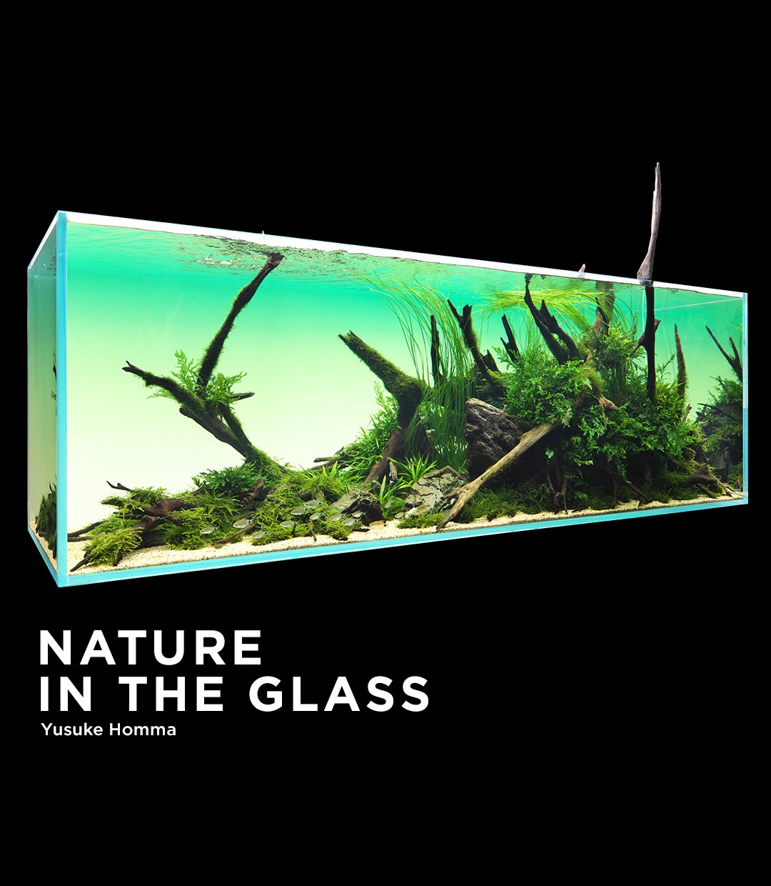 NATURE IN THE GLASS 「雨過ぎて蒼く」