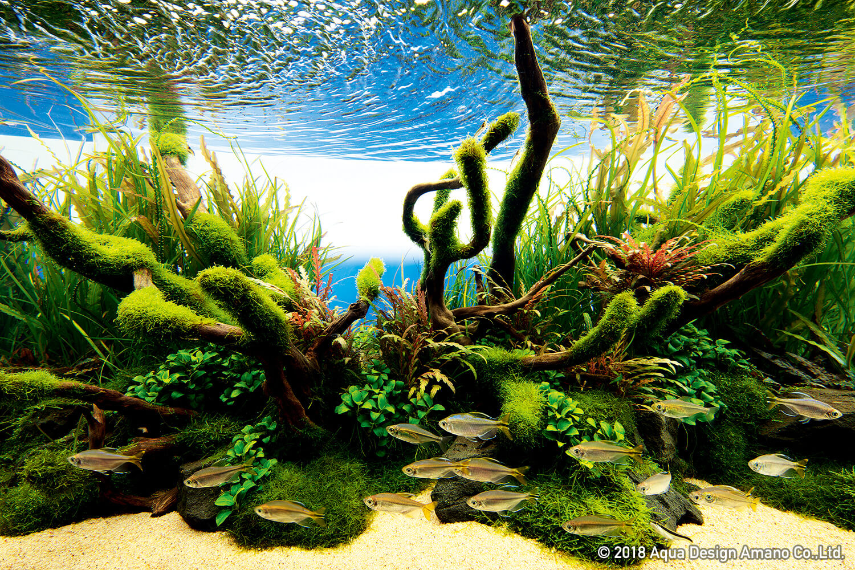 Nature In The Glass Wild Bush Ada