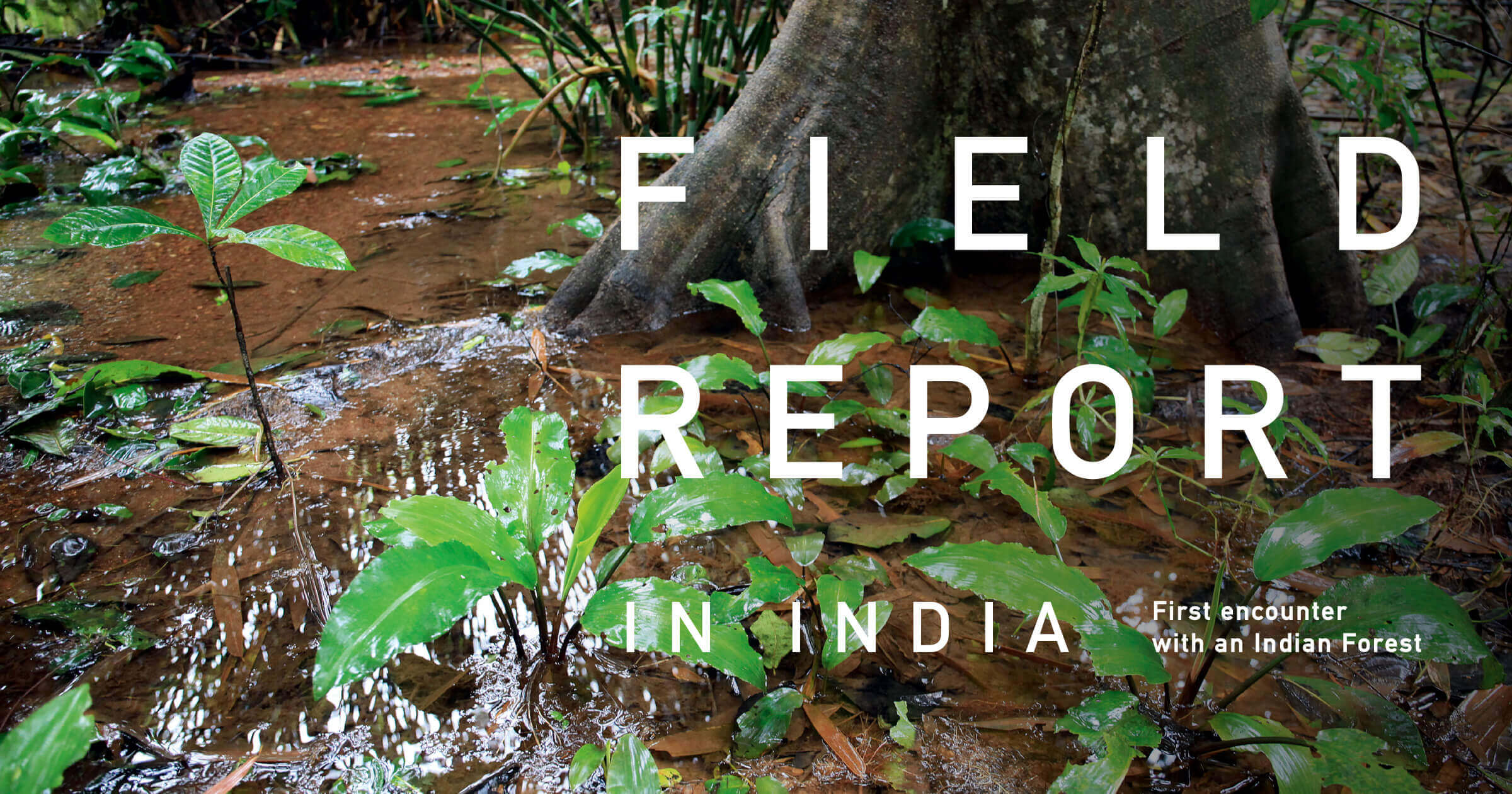 FIELD REPORT IN INDIA -First encounter with an Indian Forest-