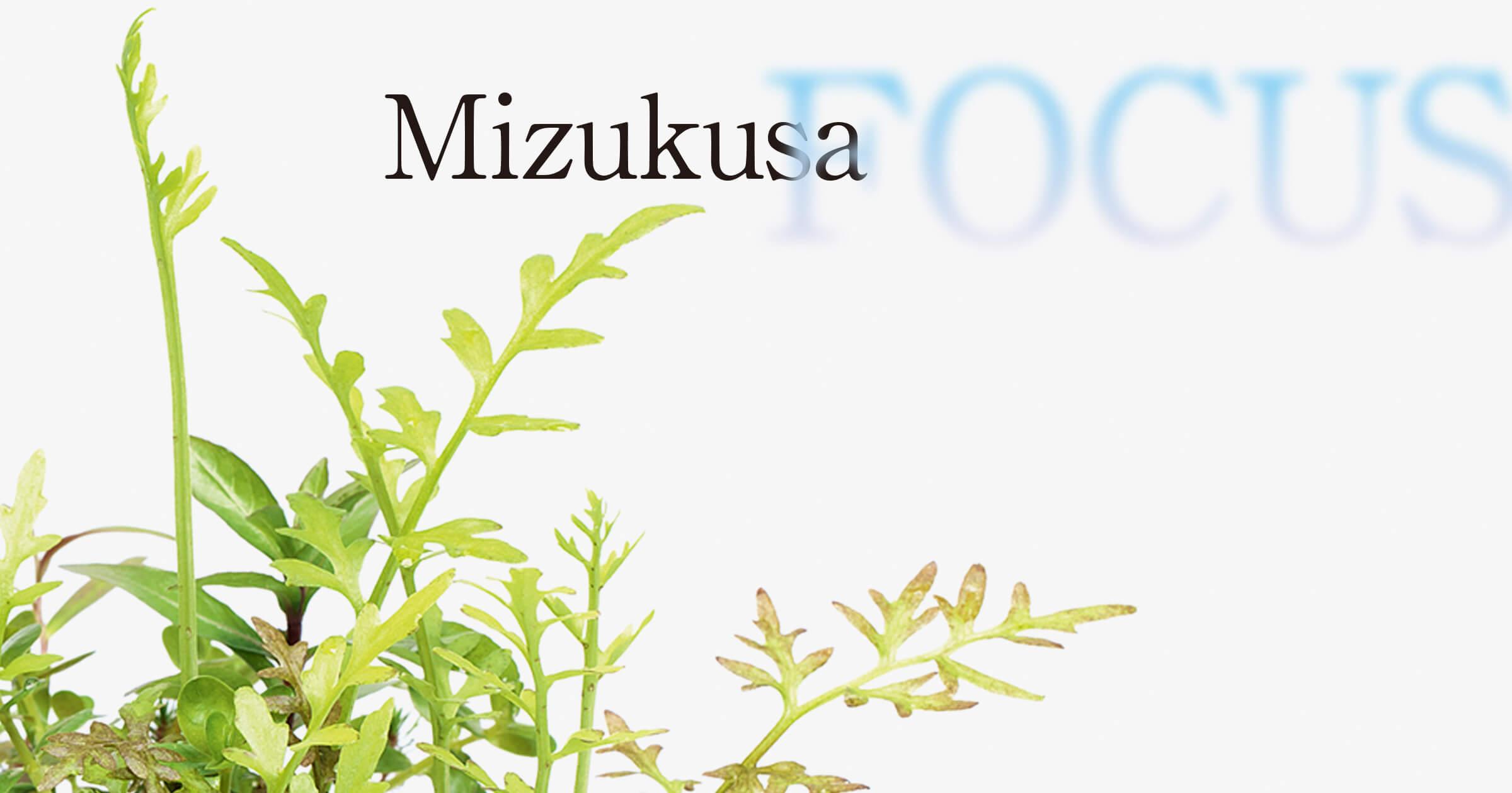 """MIZUKUSA FOCUS """"Trimming of emersed leaves"""""""