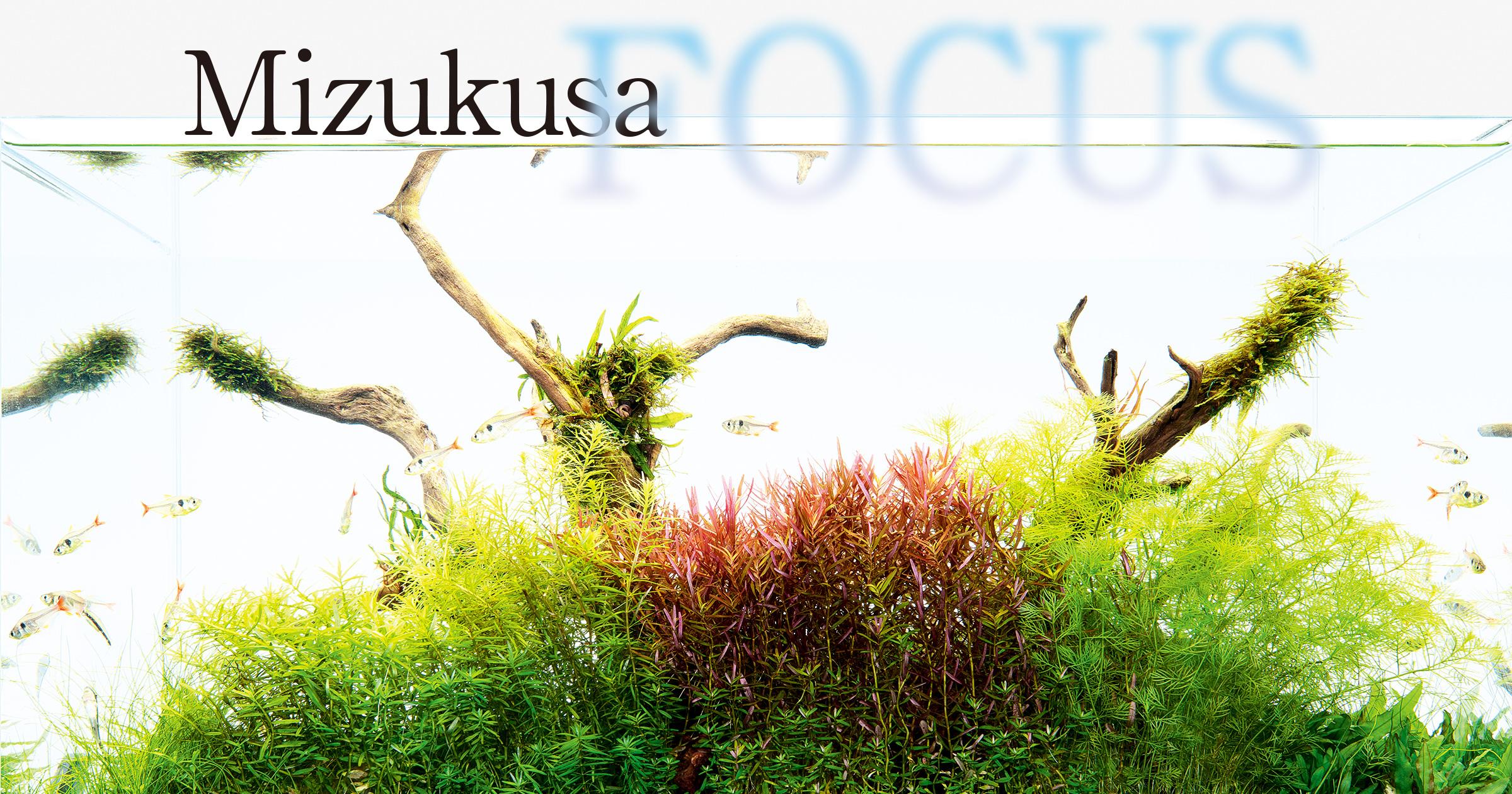 """MIZUKUSA FOCUS """"Mizukusa no Mori Growth Comparison"""""""