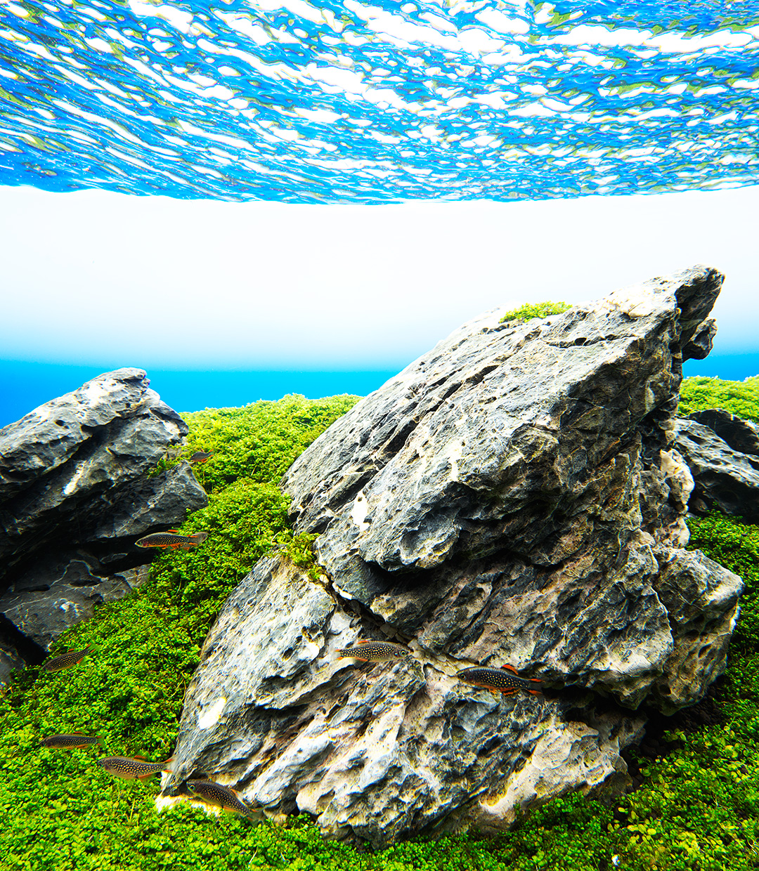 NATURE IN THE GLASS 'A simple Iwagumi aquascape with a powerful impression'