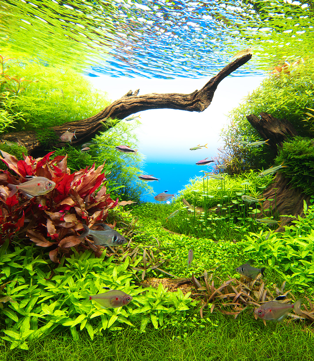 NATURE IN THE GLASS 'An Aquatic View Colorfully Decorated with Flora and Fauna'