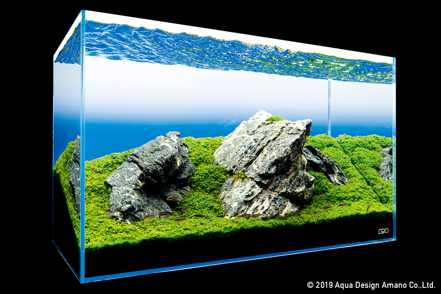 Nature In The Glass A Simple Iwagumi Aquascape With A Powerful Impression Ada