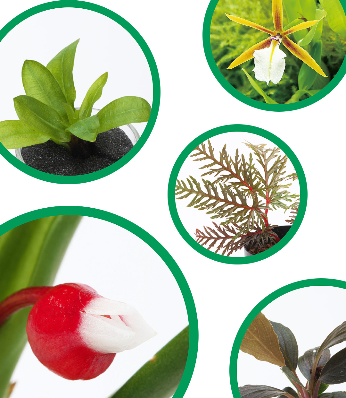 Enjoying Jungle Plants and various tropical plants.
