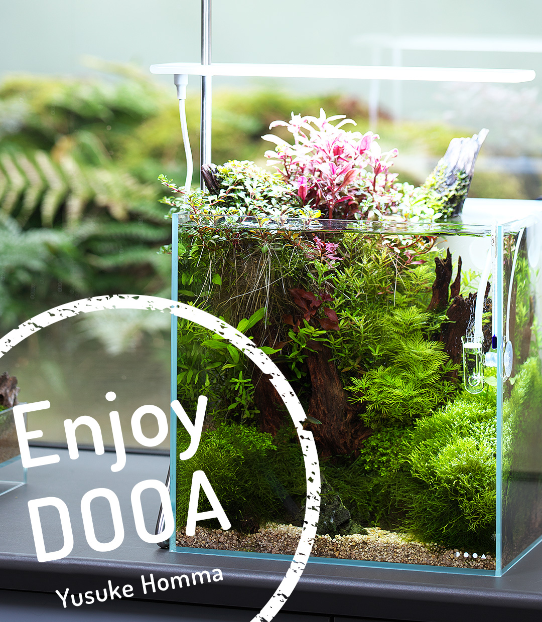 Enjoy DOOA: Open top aquarium with driftwood and Wabi-Kusa in System Aqua 30