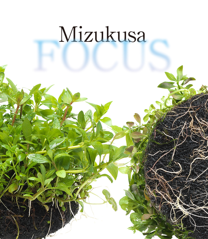 "Mizukusa FOCUS ""Upgrading Wabi-Kusa"""