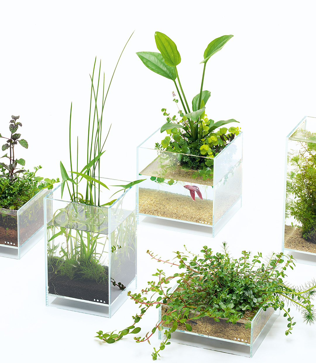 Enjoying Wabi-Kusa with Neo Glass Air