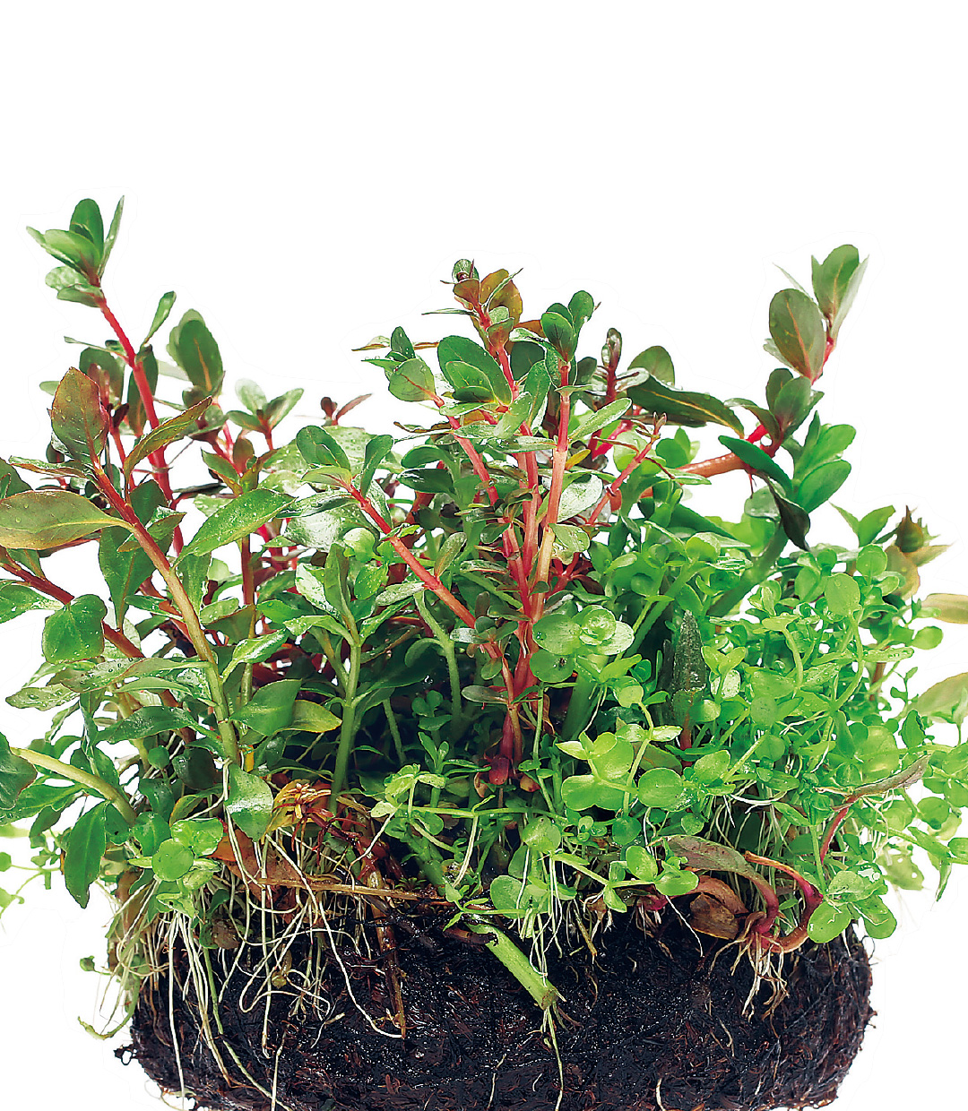 Let's grow aquatic plants simple & easy.