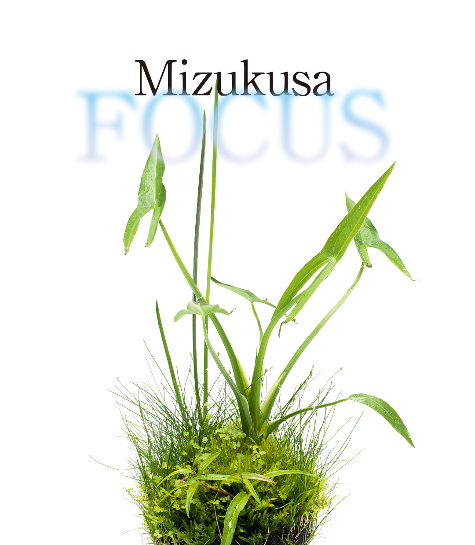 Mizukusa FOCUS 'Wabi-Kusa Mizube MIX'