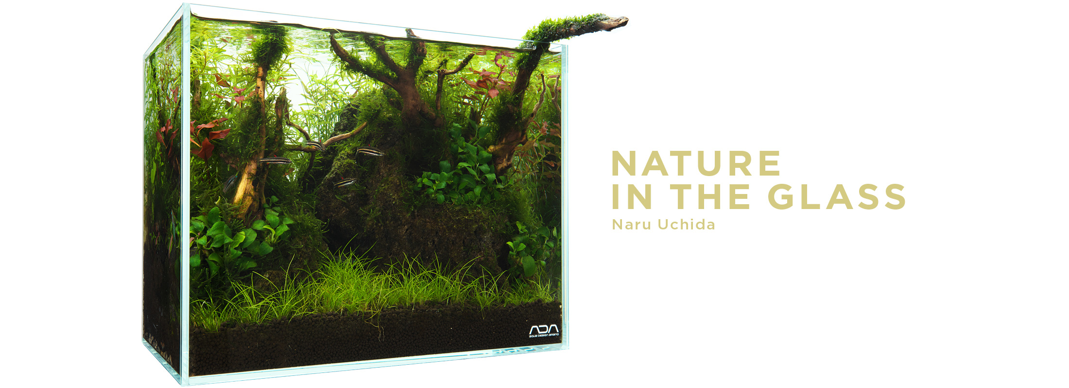 NATURE IN THE GLASS 'A hideout for fish'