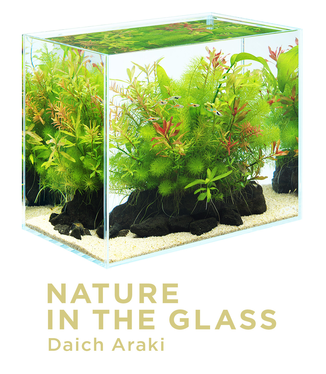 NATURE IN THE GLASS 'A bouquet of aquatic plants'