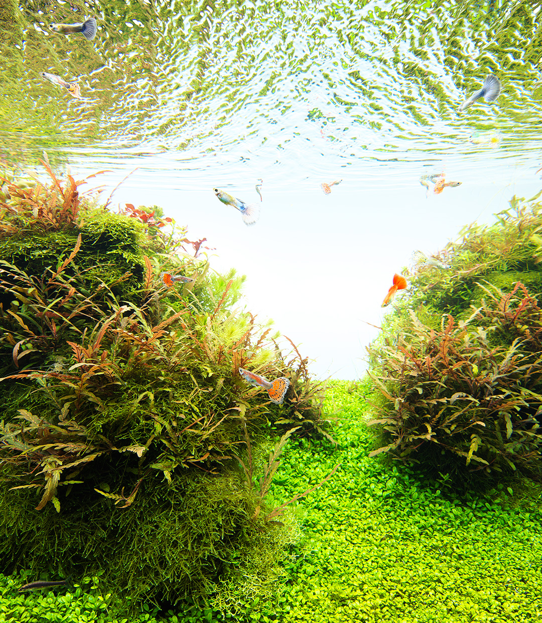 NATURE  IN THE GLASS 'The Impression of Paradise'
