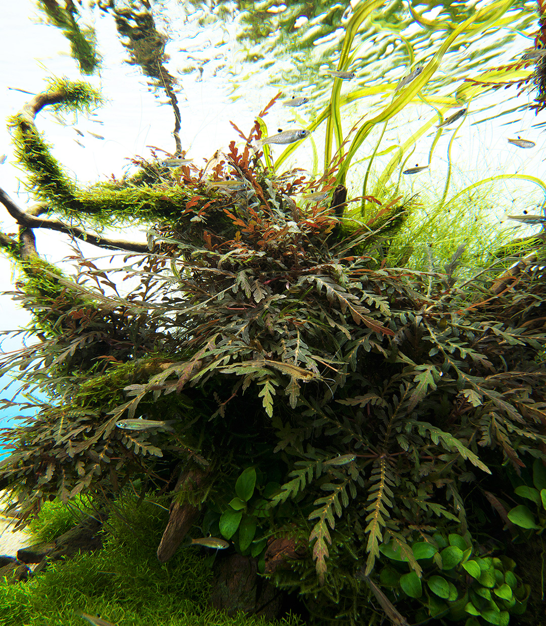 NATURE IN THE GLASS 'On the Breezy Side'