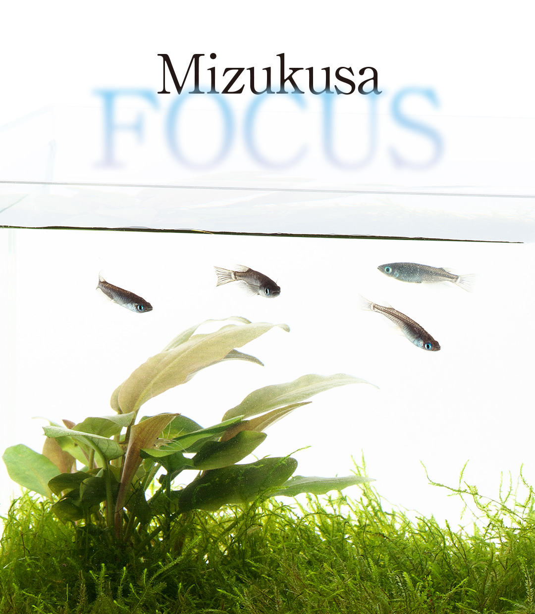Mizukusa FOCUS 'Advances on the Wabi-Kusa Mat'