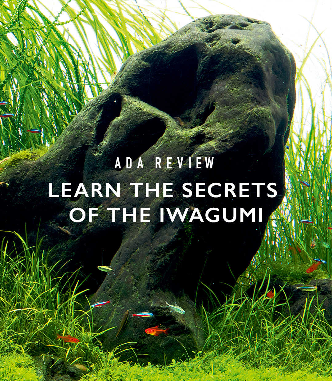 ADA Review 'Learn the Secrets of the Iwagumi'