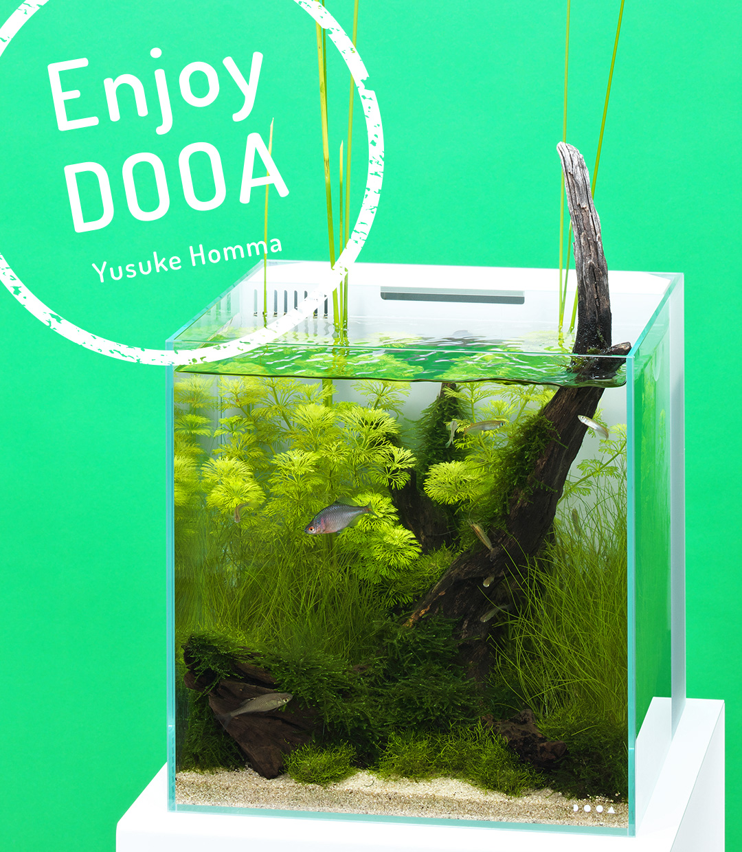 Enjoy DOOA 'Summer lagoon image spreading from a small aquarium-Simple Japanese style aquascape'