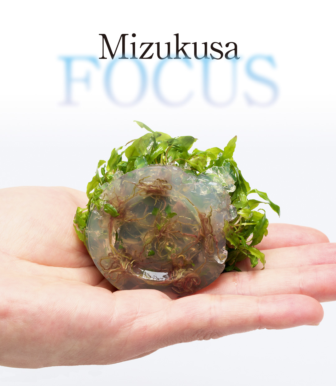 Mizukusa FOCUS 'Soon to Be Liquid Culture Medium'