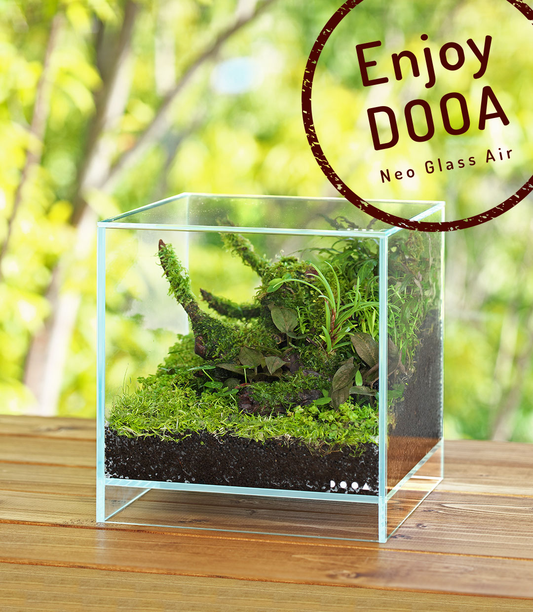 Enjoy DOOA 'Casually enjoy growing terrestrial leaves of aquatic plants with Neo Glass Air'