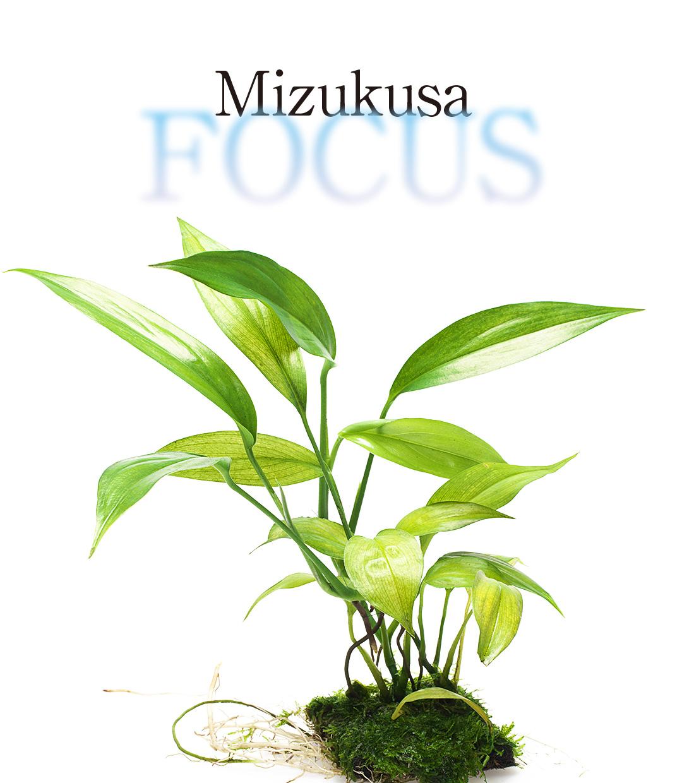 Mizukusa FOCUS 'Wabi-Kusa Mat & LC Cup'