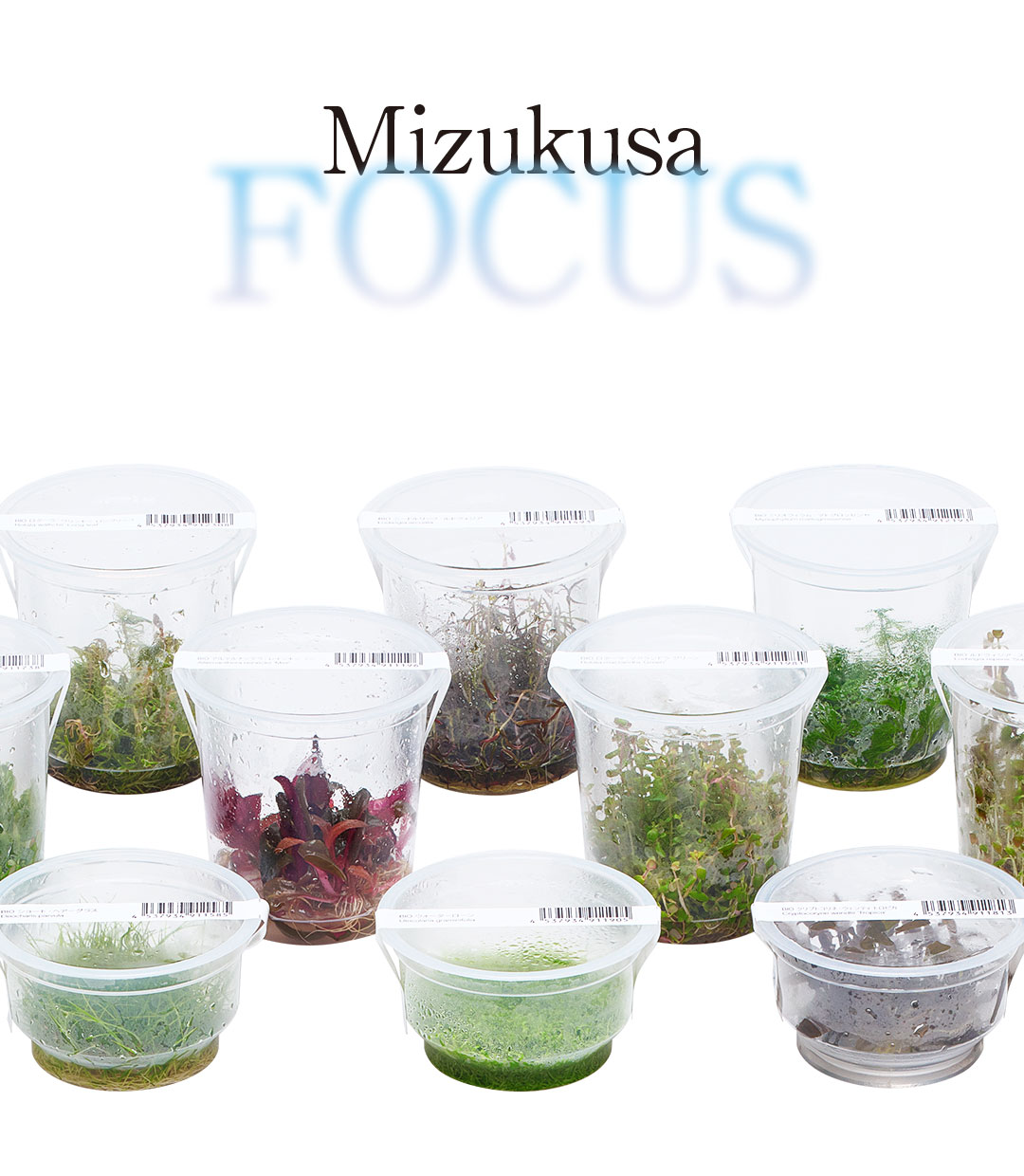Mizukusa FOCUS 'The Increasing Variety of Liquid-Cultured Plants'