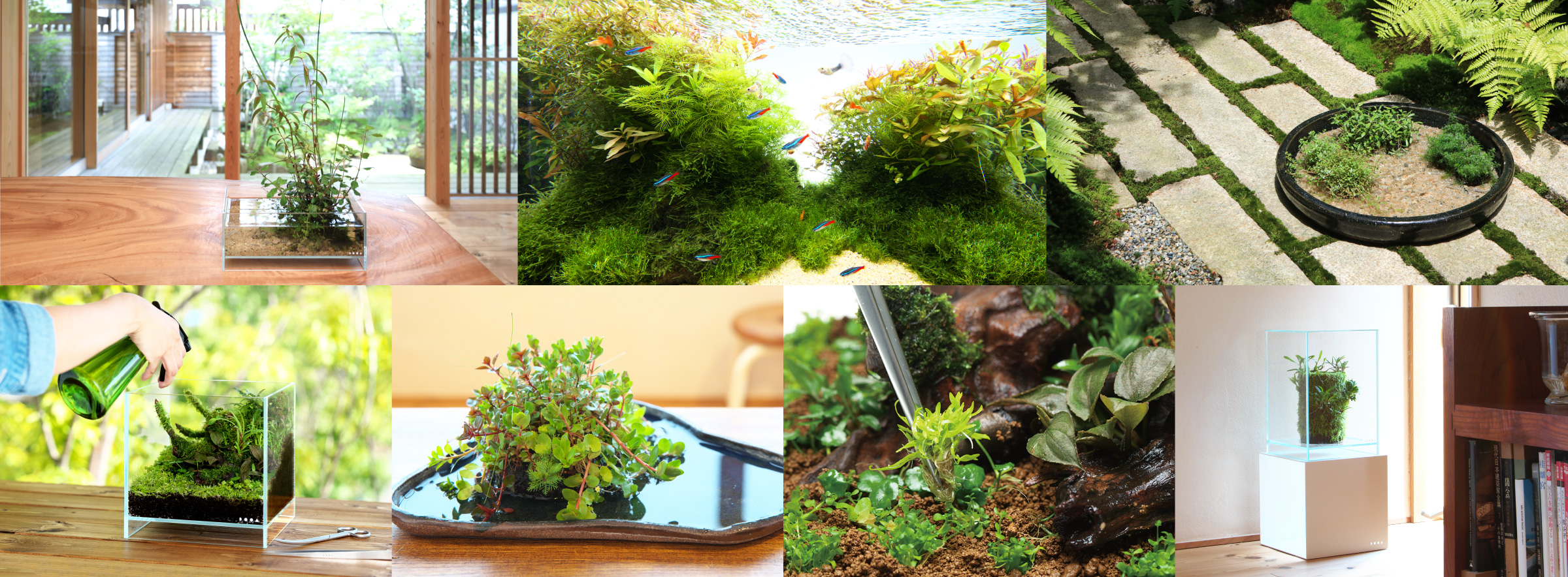 HOME AQUARIUM 'Enjoy plants with Neo Glass Air'