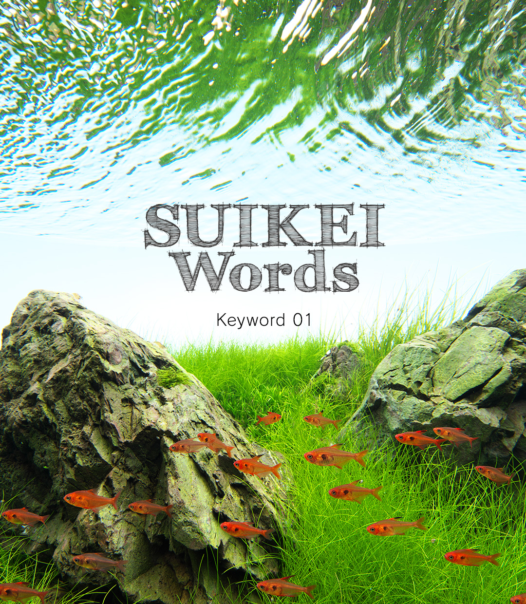 SUIKEI Words Keyword 01 'Layout composition – Iwagumi'