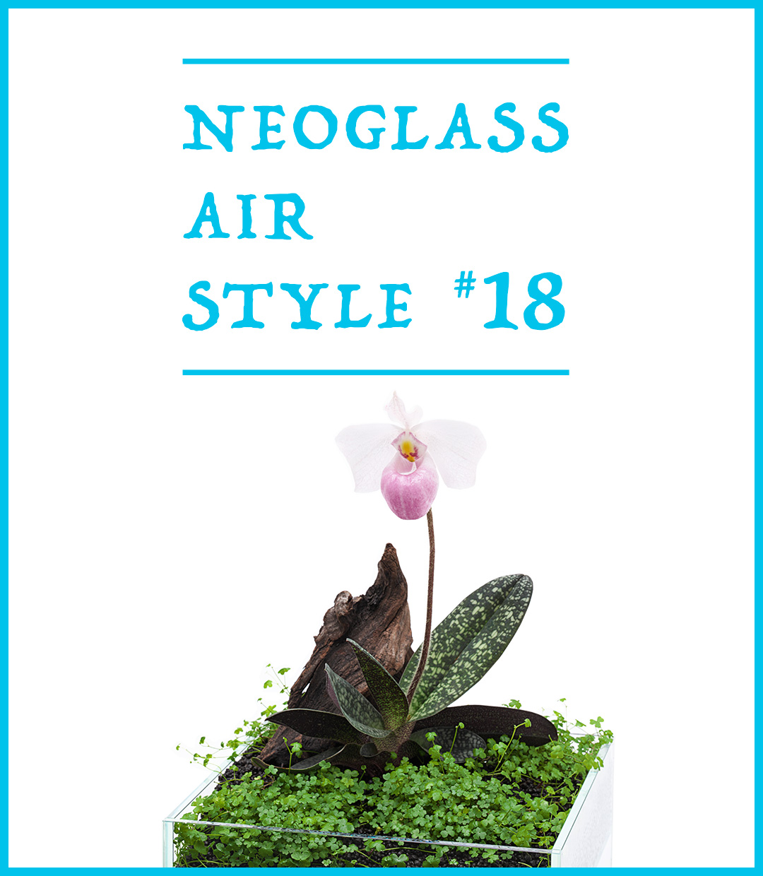 NEO GLASS AIR STYLE 'The aquatic plant carpet and  the Looking-Back Beauty'