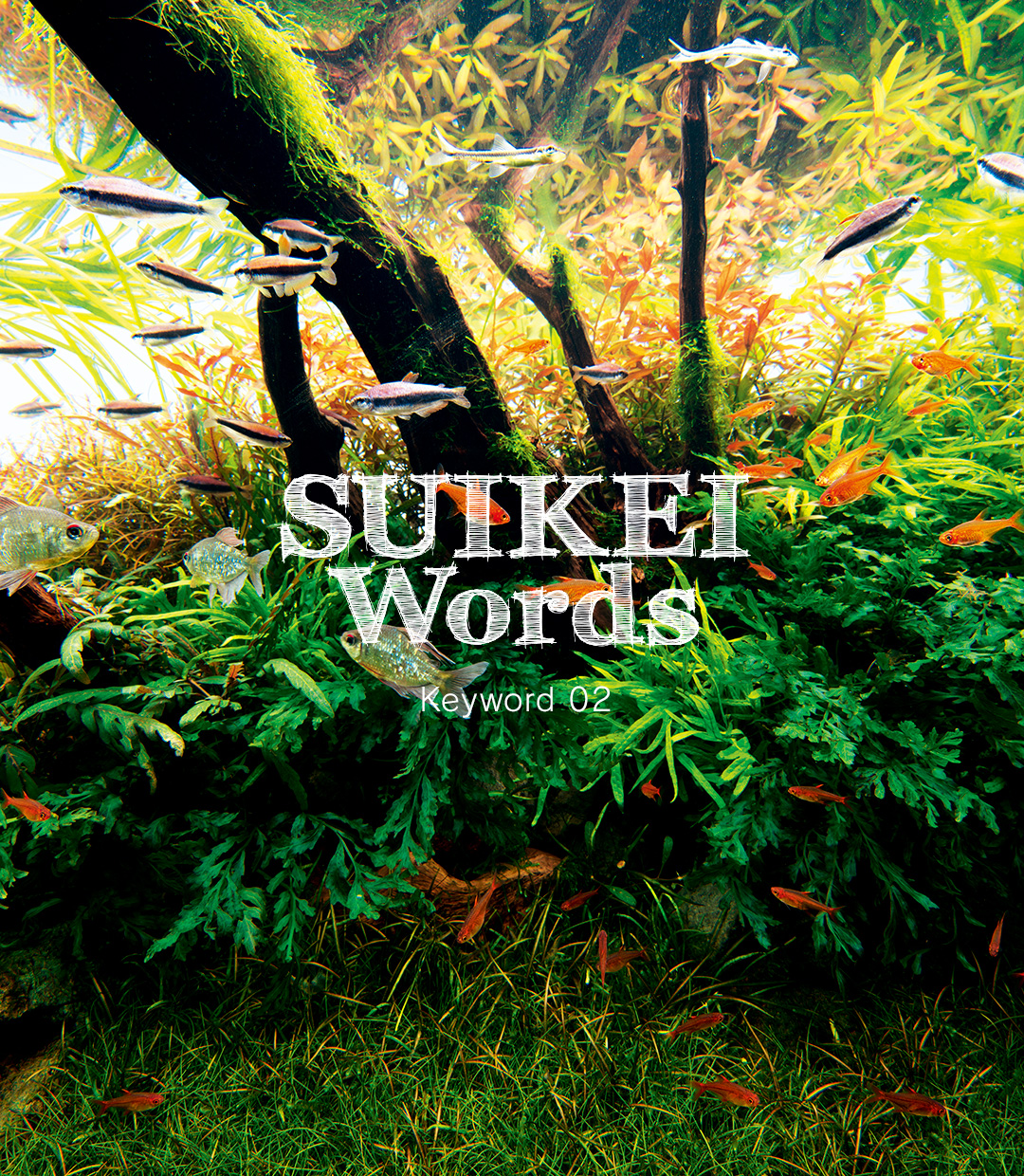 SUIKEI WORDS Keyword 02 'Layout composition – Driftwood'