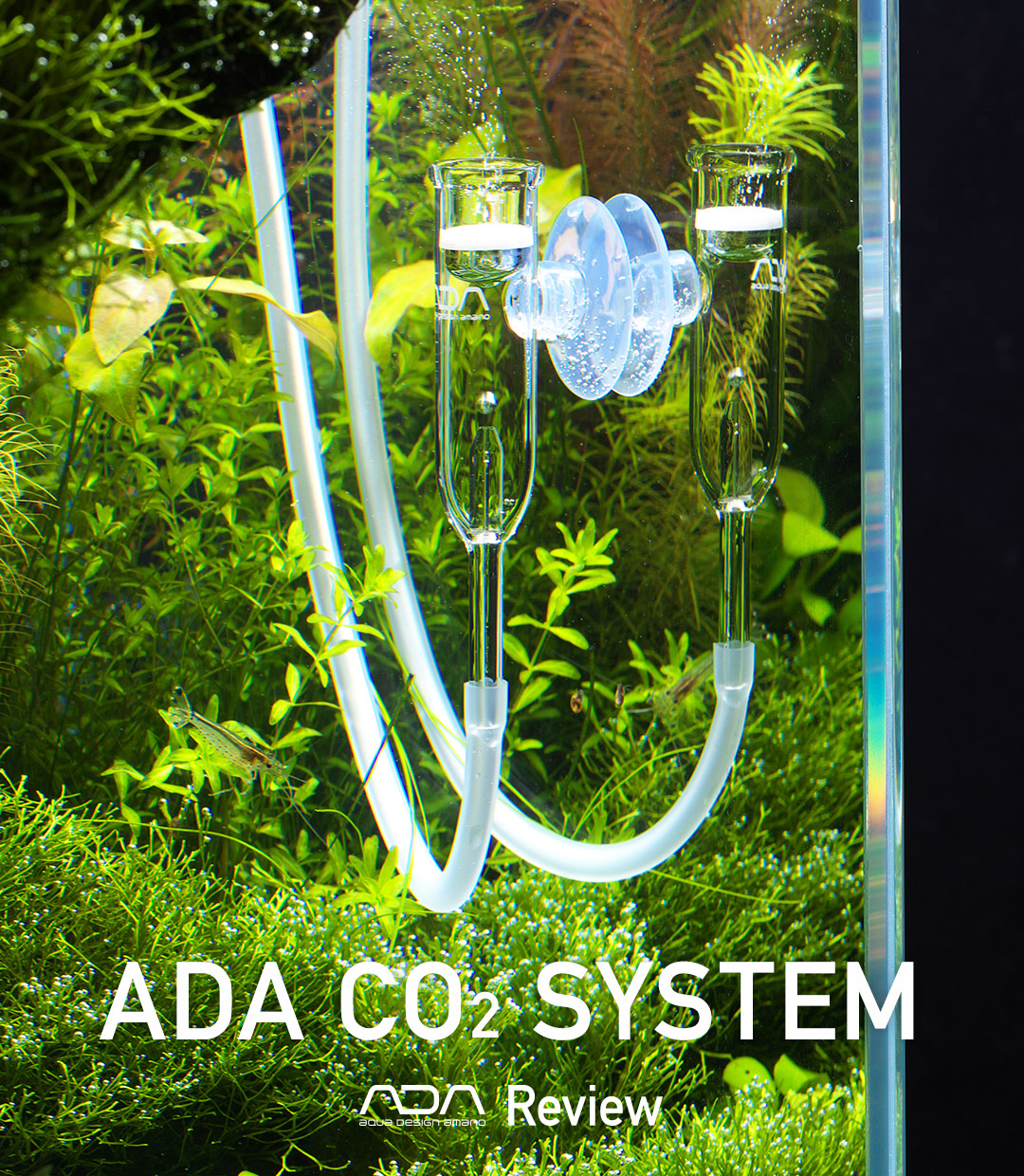 ADA Review – ADA CO2 SYSTEM –