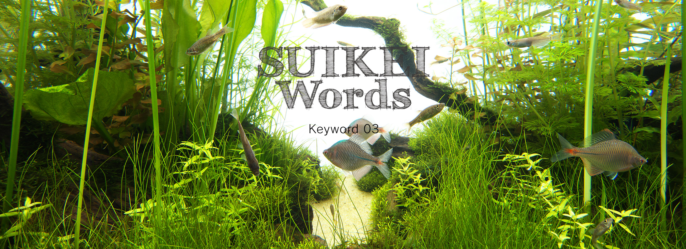 SUIKEI WORDS Keyword 03 'Lending a depth to aquascapes'