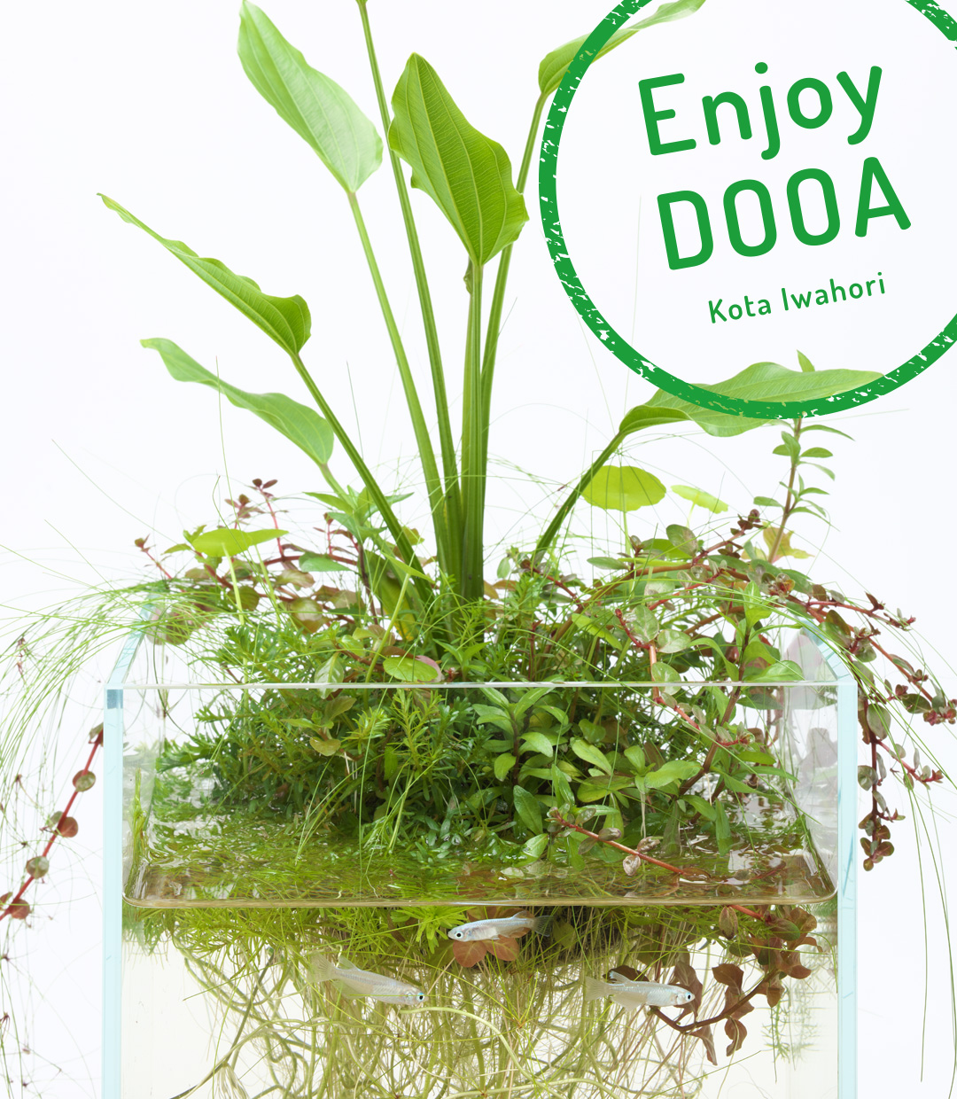Enjoy DOOA 'Enjoy the nice appearance of Echinodorus with Neo Glass Air'