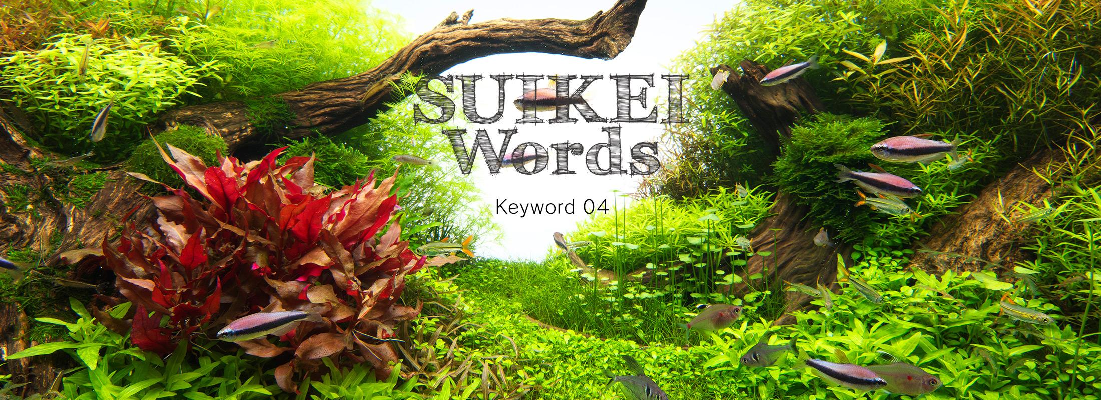 SUIKEI WORDS Keyword 04 'Planting'