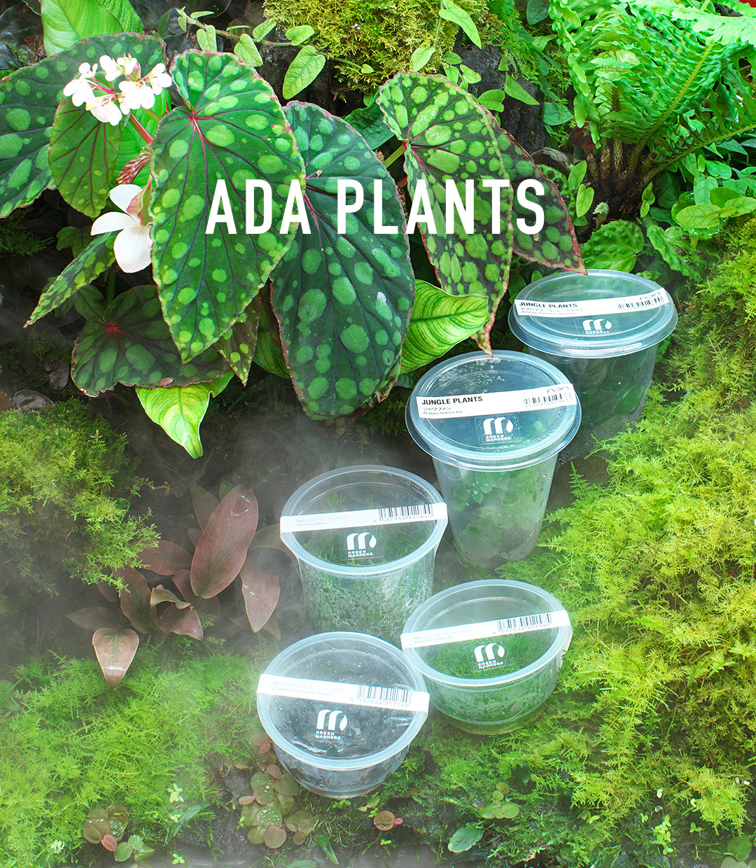 ADA PLANTS 'As If Plants Evolve, the Style of ADA's Living Products Becomes Diverse'