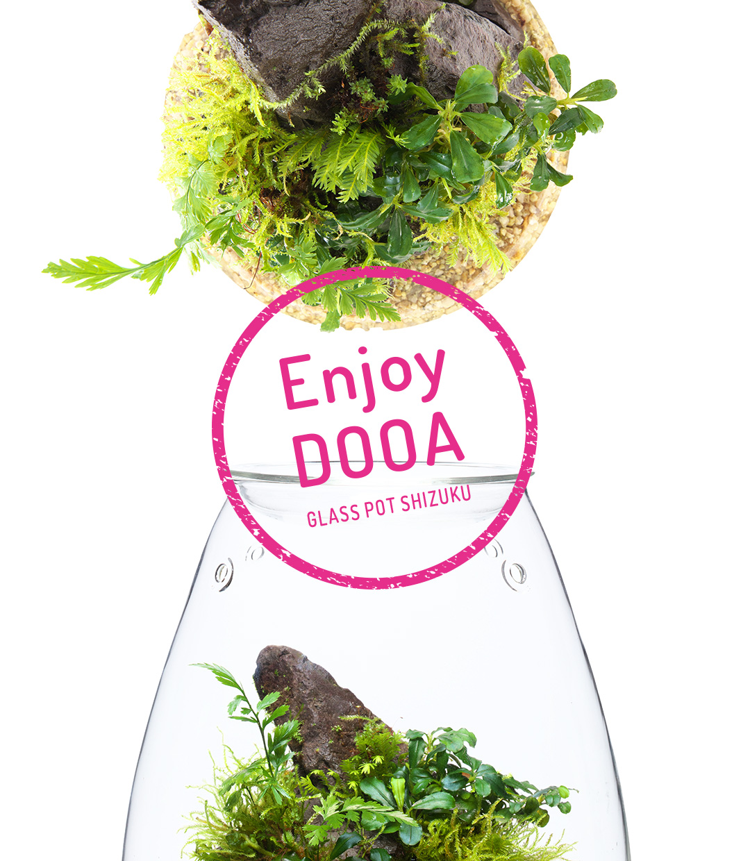 Enjoy DOOA 'GLASS POT SHIZUKU'