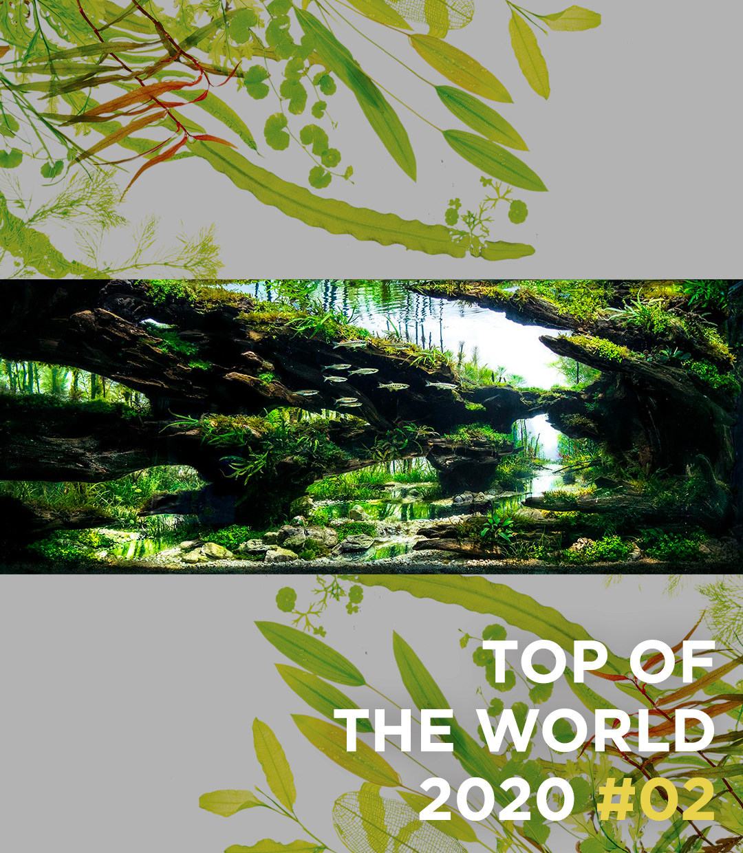 TOP OF THE WORLD 2020 #02 Steven Chong