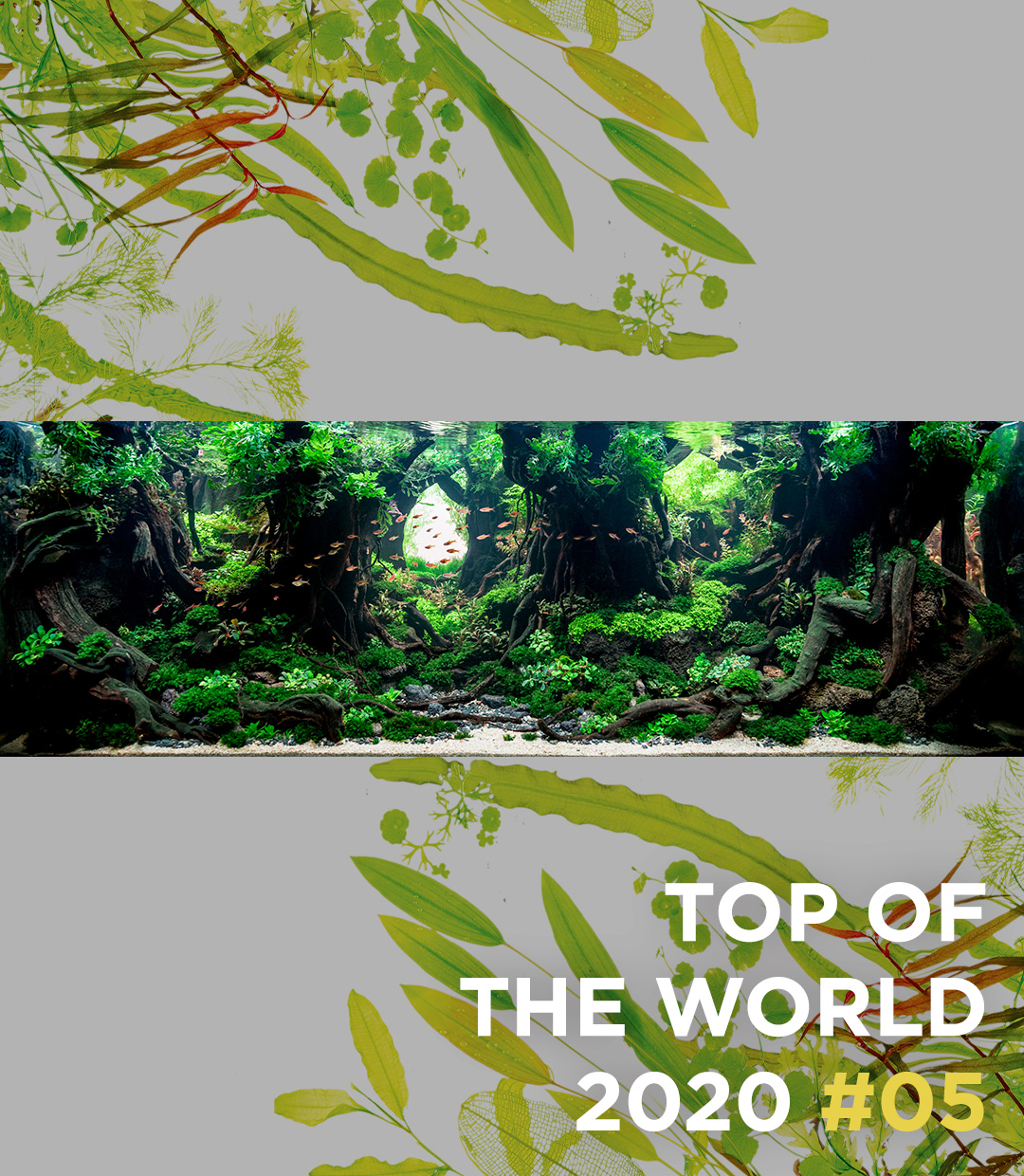 TOP OF THE WORLD 2020 #05 Roger Goh