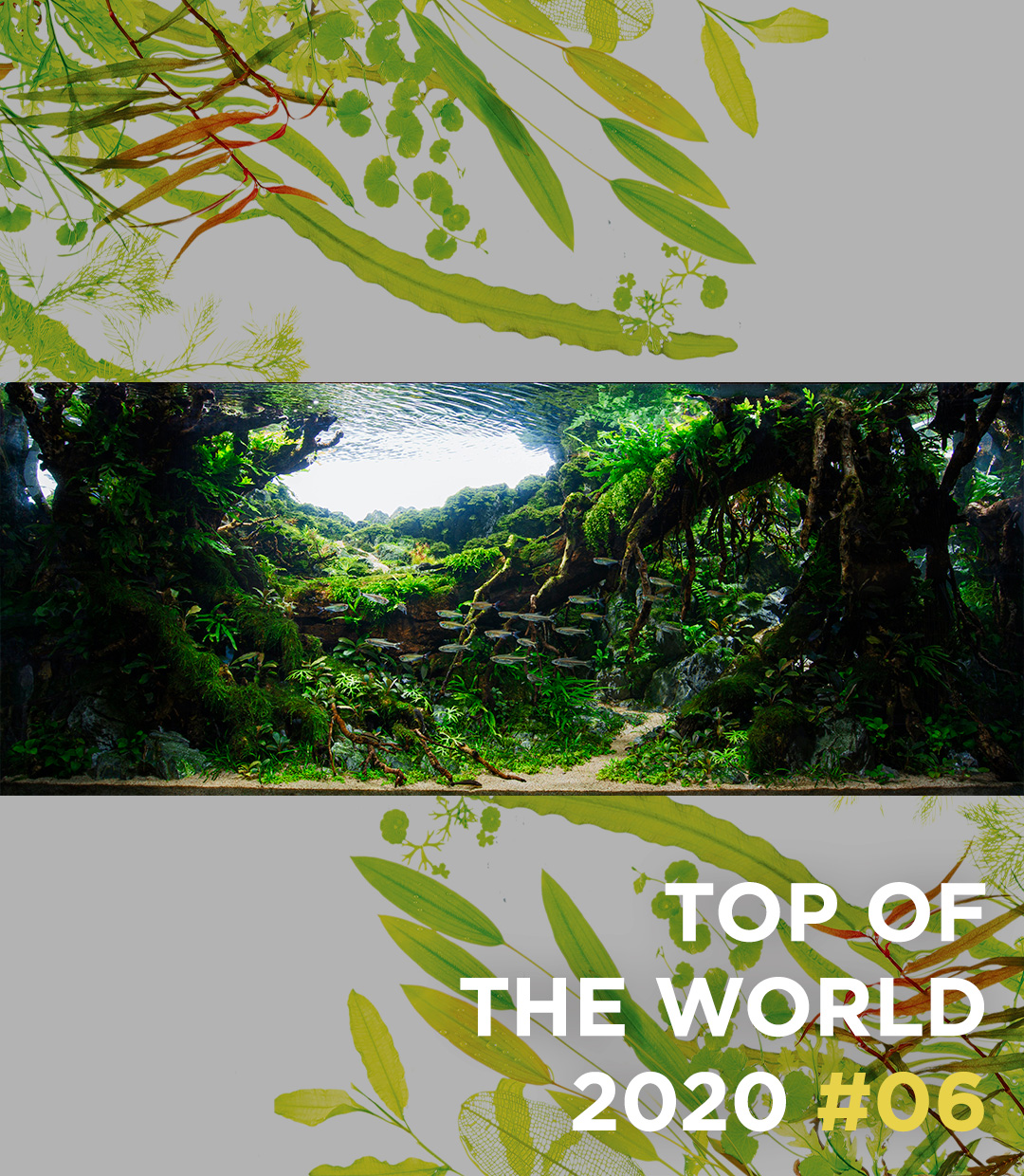 TOP OF THE WORLD 2020 #06 Jheng Yu Lyu