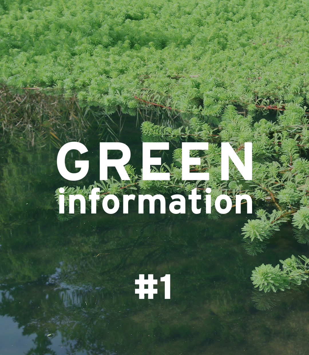 GREEN information #1 'Tropical aquatic plants can overwinter'
