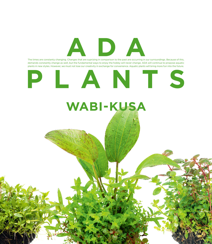ADA PLANTS 'Wabi-Kusa'