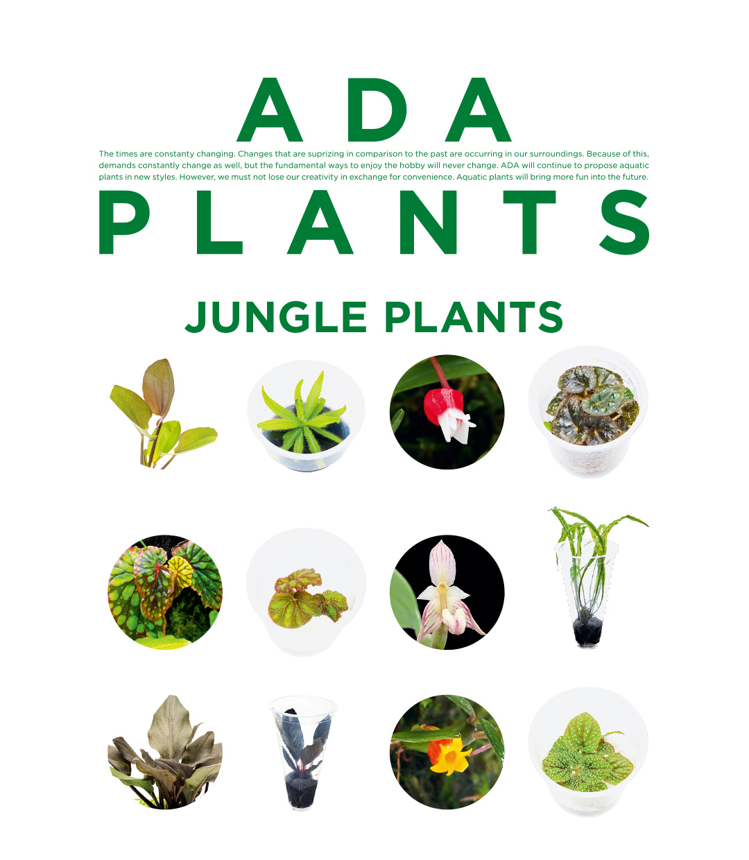ADA PLANTS 'Jungle Plants'