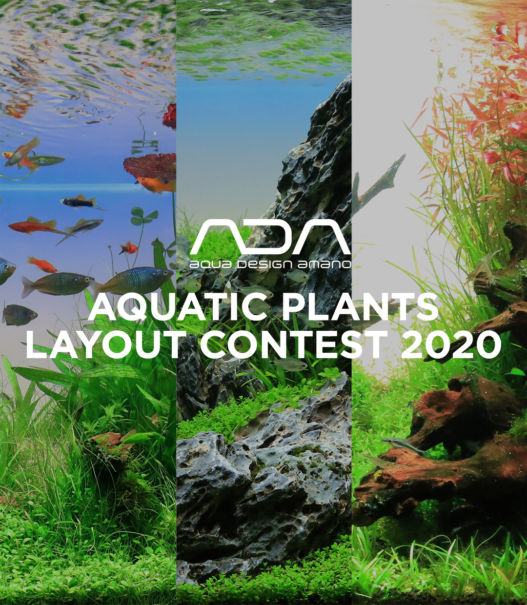 ADA AQUATIC PLANTS LAYOUT CONTEST 2020