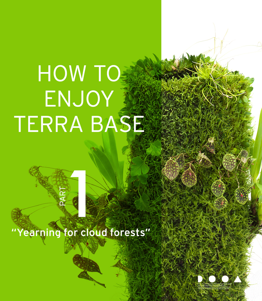 HOW TO ENJOY TERRA BASE  'Yearning for cloud forests'