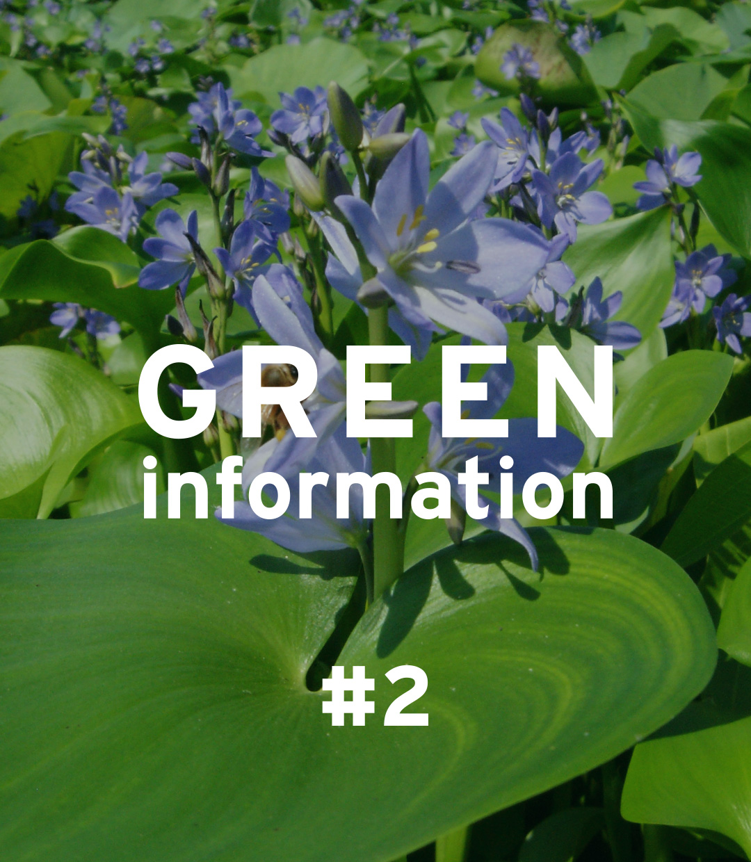 "GREEN information #2 ""About Invasive Alien Species"""