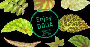 Enjoy DOOA 'JUNGLE PLANTS BEGONIA COLLECTION'