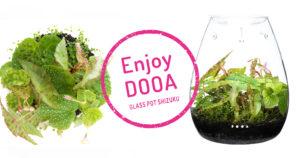 Enjoy DOOA 'Enjoy exotic tropical plants that prefer humid environments'