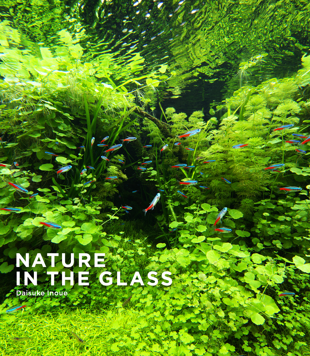 NATURE IN THE GLASS 'Green Heaven'